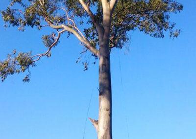 Chop Chop Tree Fellers